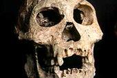 У древнейших людей сочетались черты обезьян и современного человека