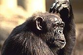 Анализ «обезьяньей» линии лихорадки Эбола помог разобраться в генетике вируса