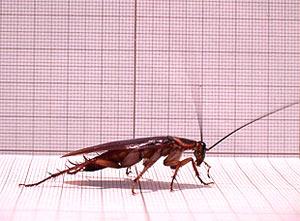 Тараканы только на первый взгляд кажутся непрошеными нахлебниками.