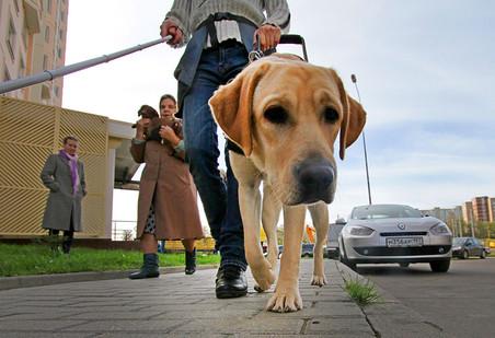 Москвичи объявили в соцсетях кампанию по поиску похищенного пса