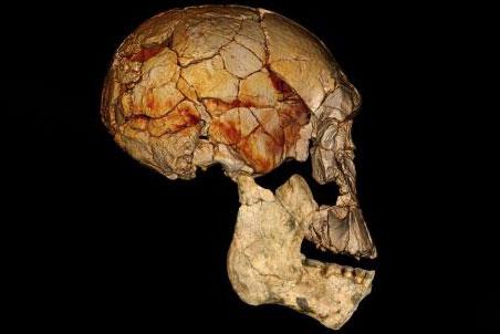 Череп гоминида 1470, совмещенный с челюстью от 60000
