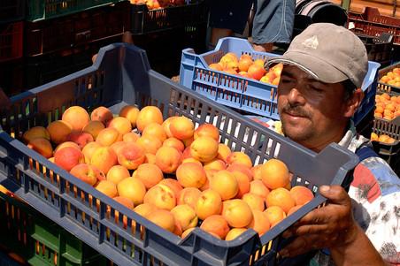 Россия наказала Албанию за реэкспорт овощей и фруктов