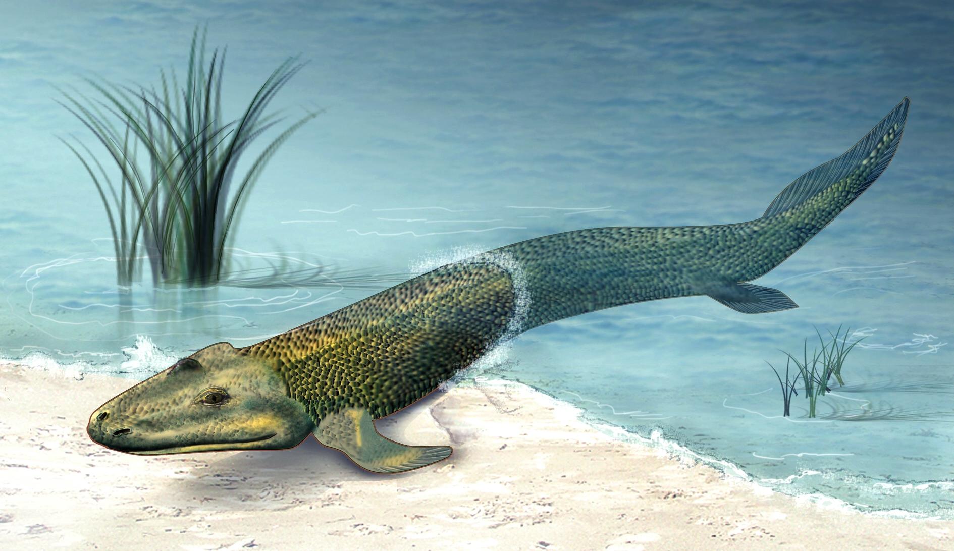 когда появилась первая рыбалка