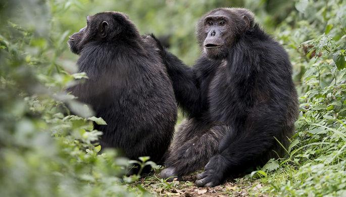 Обезьяны оторвали ухо ипальцы человеку вхарьковском зоопарке