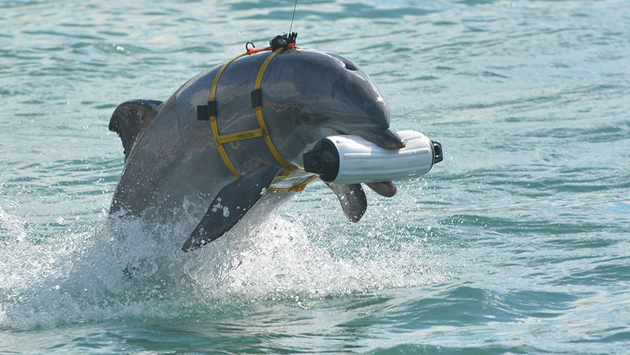 http://img.gazeta.ru/files3/193/8116193/Dolphins-3-pic905-895x505-18439.jpg