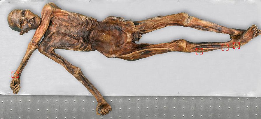 3D-модель знаменитой мумиии