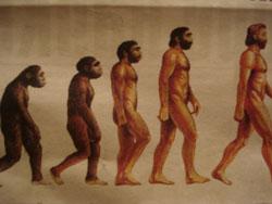Ученые доказали необратимость эволюции организмов