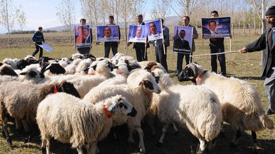 Английских овец обучили узнавать Барака Обаму