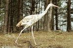 Муравьевский парк в пойме Амура, где гнездятся редкие журавли, признан иностранным агентом, сообщает...