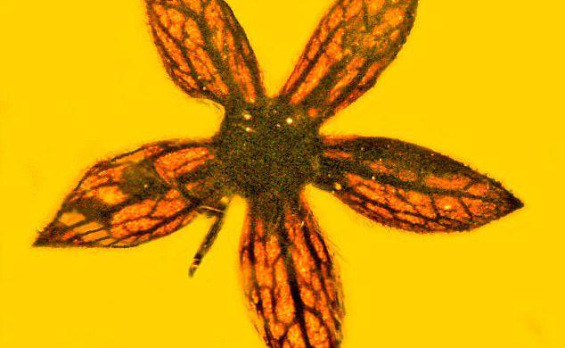 Ученые отыскали цветок возрастом 100 млн лет