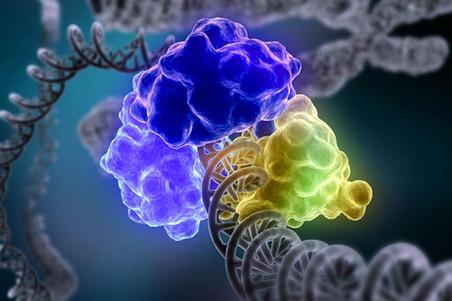 Как происходит «починка» поврежденных молекул ДНК