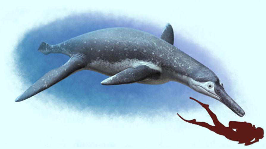 Наберегу Волги обнаружили останки нового вида плиозавров
