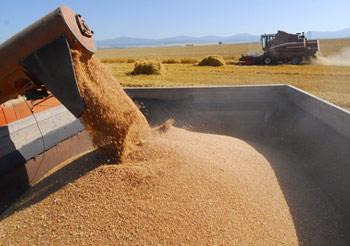 После отмены с 1 июля эмбарго на экспорт зерна Россия вывезла 1,4 млн тонн зерна