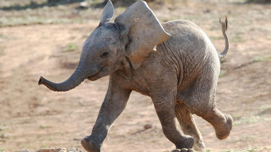 Биологи пояснили, почему животные среднего размера— самые быстрые