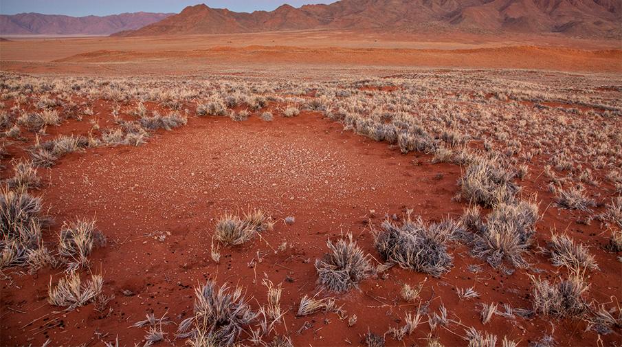 Ученые узнали происхождение загадочных кругов впустынях Намибии