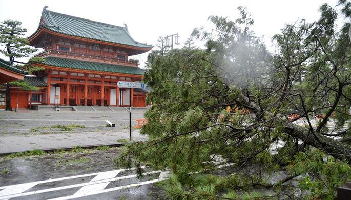 Поврежденное из-за тайфуна Джеби дерево в Киото