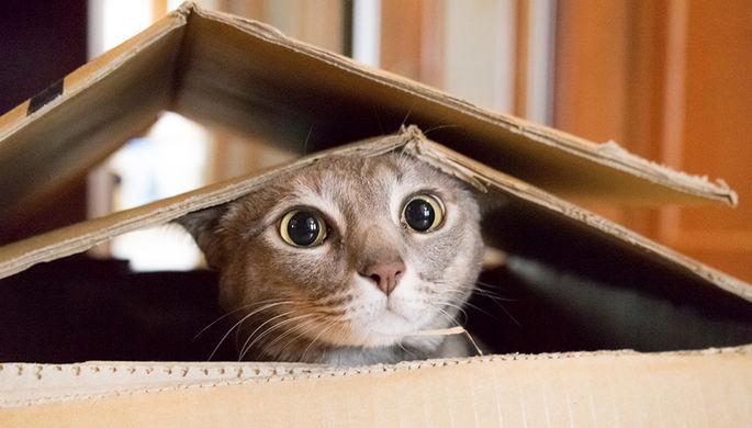 Cотрудники экстренных служб обнаружили кошку вуцелевшей квартире разрушенного дома вИжевске