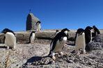 Пять взглядов на Антарктиду