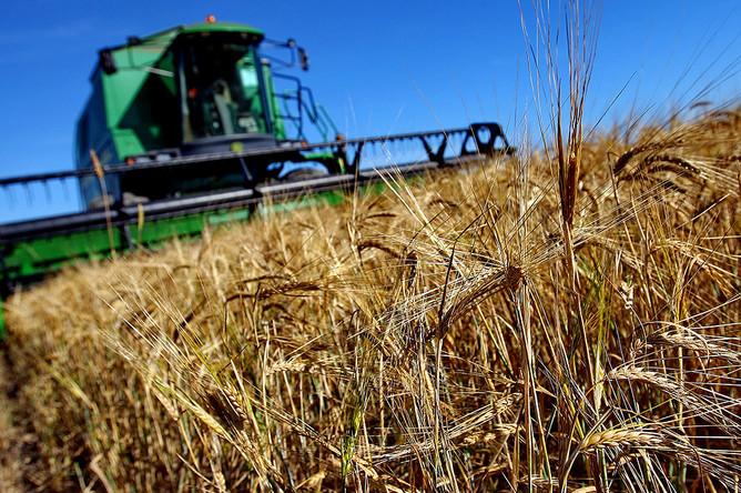 В РФ годовой вред отамериканского клопа оценили в2 млрд руб.