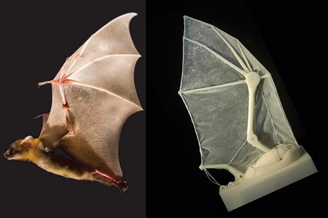 Создано искусственное крыло летучей мыши - Газета.Ru
