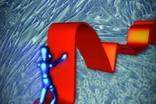 Перерывы в лечении позволили сделать противораковый препарат эффективнее в борьбе с меланомой