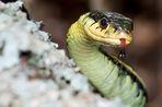 Змеи заострили зрение человека