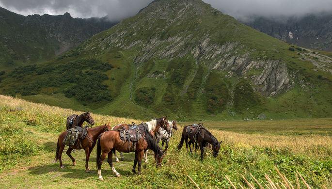 Ученые поняли, как люди вывели современные породы лошадей