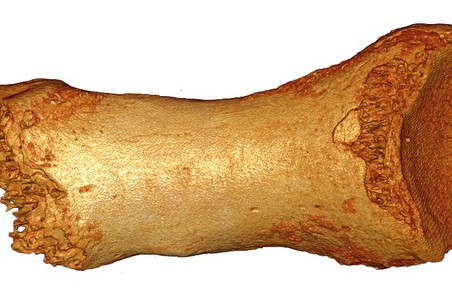 Фаланга пальца неандертальской женщины