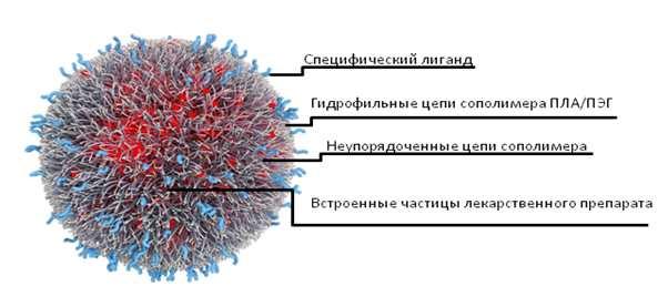 Схема строения нанолекарства (BIND)