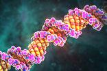 Ученые нашли способ избавления древних ДНК от более поздних наслоений, мешающих генетическому анализу