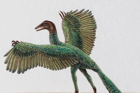 Таинственный археоптерикс умел летать и напоминал ворону