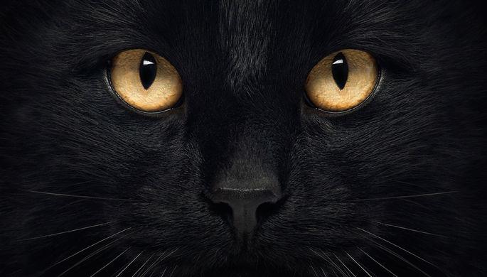 ВСША после выхода «Черной пантеры» изприютов разобрали темных кошек