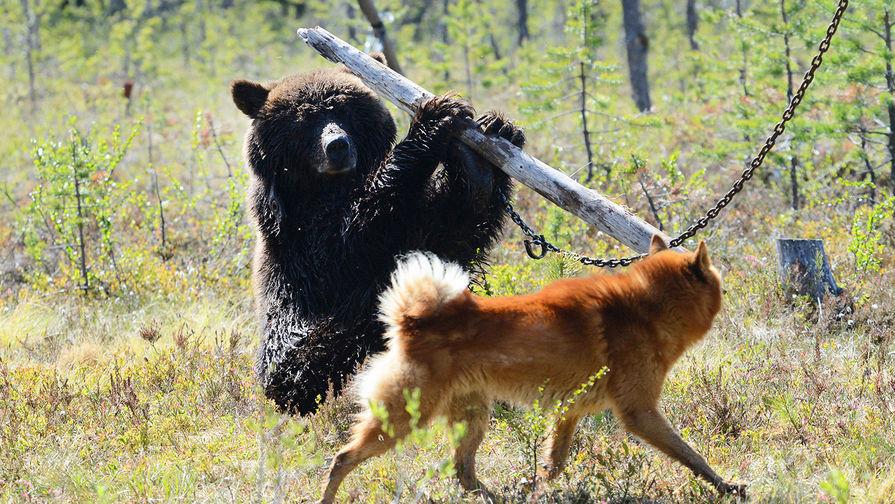 Совфед отвергнул  закон опритравке собак винтересах бизнеса— Володин