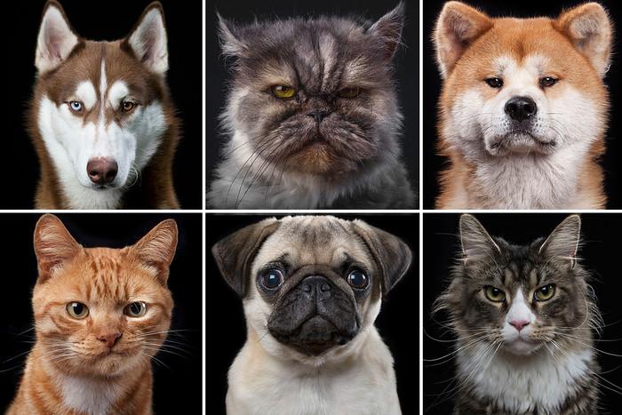 Об эмоциях животных в рисунках и фотографиях