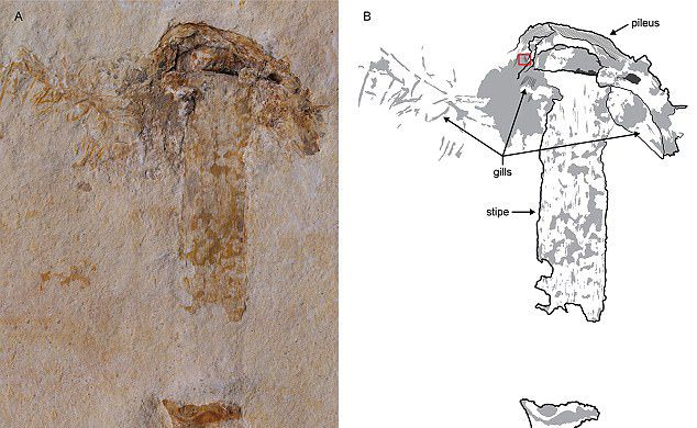 ВБразилии отыскали самый старинный гриб наЗемле
