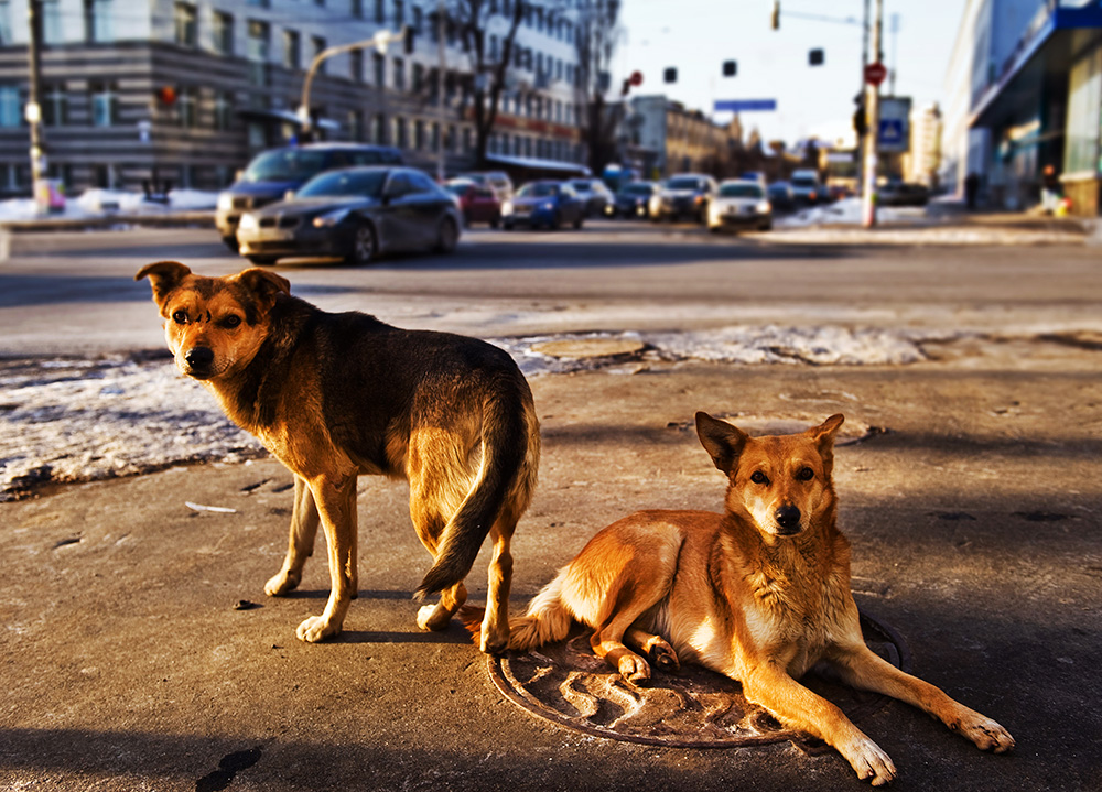 http://img.gazeta.ru/files3/473/6374473/TASS_1174831-pic4_zoom-1000x1000-59377.jpg