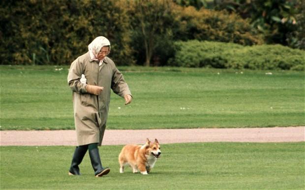 Королева впечали: скончался  последний породистый карликовый пес ЕлизаветыII