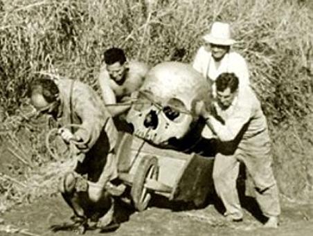 http://img.gazeta.ru/files3/501/4582501/skull-pic452-452x452-6858.jpg