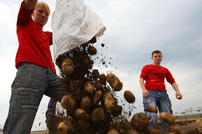 Республики Беларусь могут запретить поставки картофеля в Российскую Федерацию