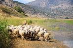 Пшеница, ячмень и просо попали в Центральную Евразию уже в III тысячелетии до нашей эры