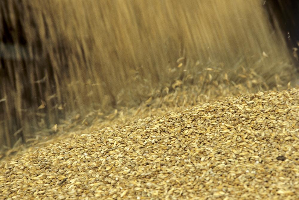 В реализацию пошло неизвестно зерно