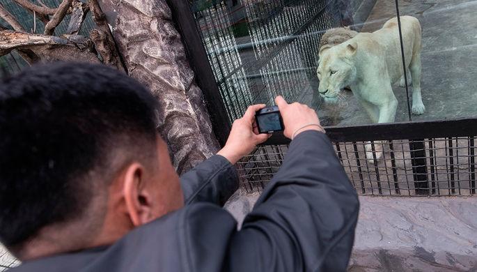 В РФ  львица напала надевочку вцирке