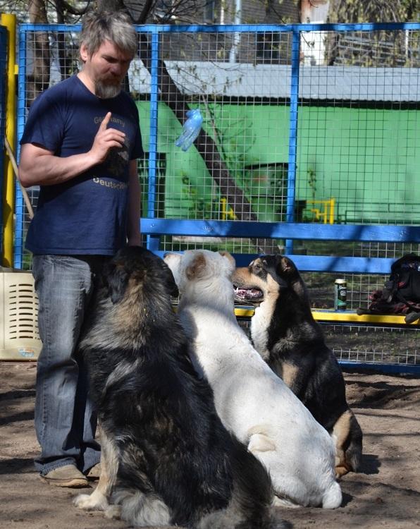Михаил Пулин дрессировка собак