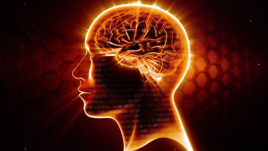 Заставить мозг не стареть смогли ученые