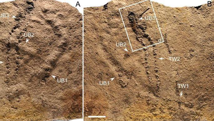 Ученые отыскали вЮАР останки древнейших четвероногих животных Земли