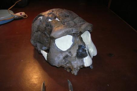 Человек прямоходящий (Homo erectus), череп Сангир 17, яванский питекантроп, возраст находки 650 тыс. лет, остров Ява. Фото: Станислав Дробышевский