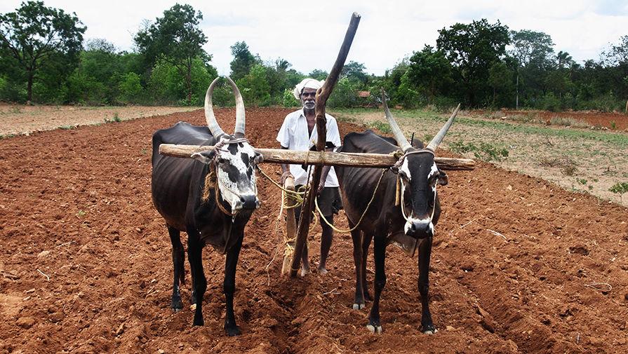 Индия впереди планеты всей