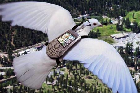 Ученые до сих пор не знают, как голуби ориентируются по магнитному полю Земли