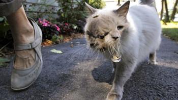 Двуликий кот рекорды бьет