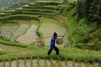 Ученые восстановили рацион жителей Южного Китая эпохи неолита
